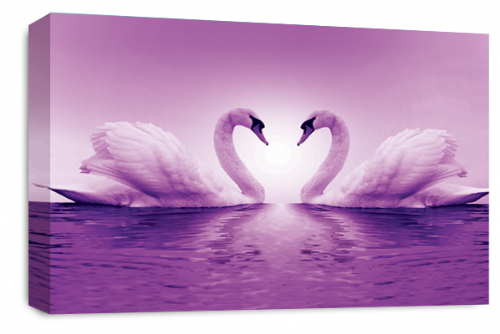 Love Heart Wall Art Picture Kissing Swans White Purple Print